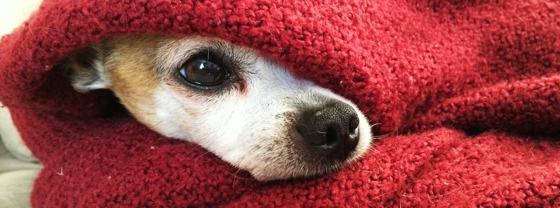 INVERNO E OS PETS: COMO PROTEGÊ-LOS DA ESTAÇÃO MAIS FRIA DO ANO?